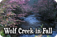 Wolf Creek in Fall